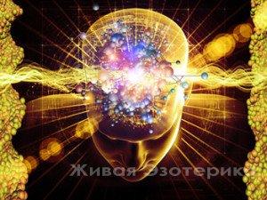 NARADA: Развитие / деградация мозга у Вознесенцев