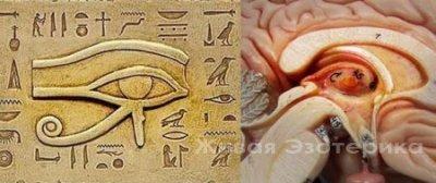 NARADA: Связь Третьего Глаза с Шишковидной Железой
